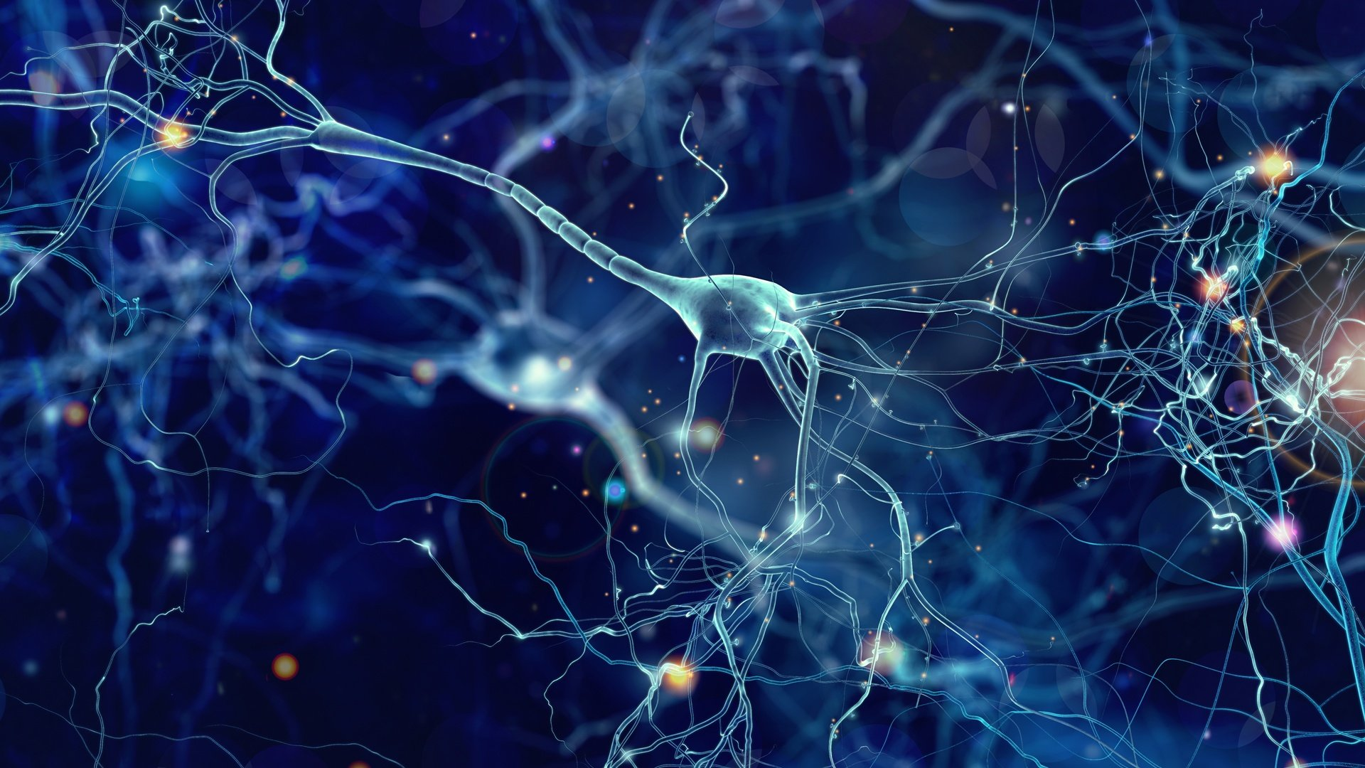 Neurons(cropped)
